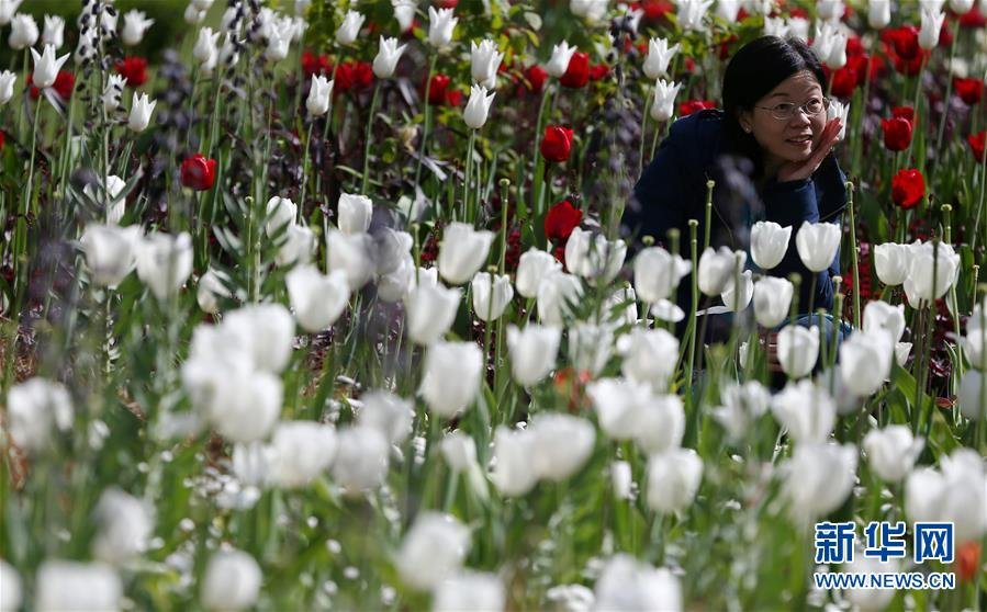 [6](外代二線)倫敦公園鮮花綻放