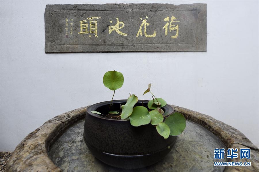 """#(社會)(2)杭州:宋代古蓮""""復活"""""""