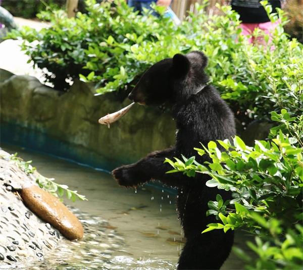 常州淹城动物园开启动物防暑总动员