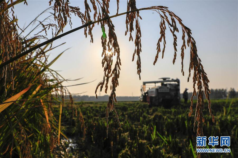 #(社會)(1)豐收的田野