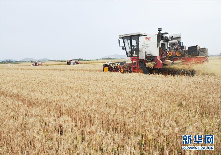#(經濟)(1)全國大規模小麥跨區機收全面展開