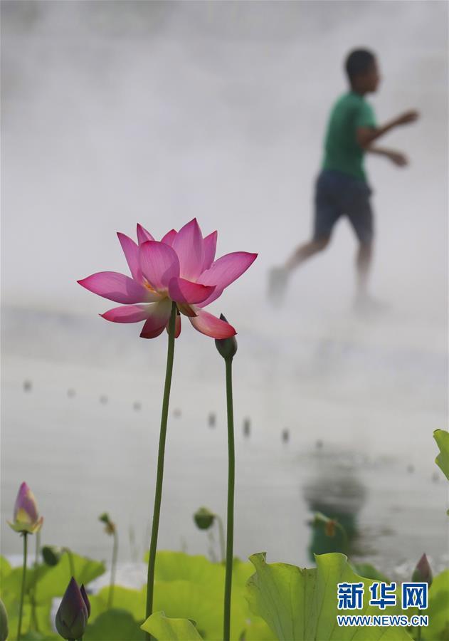 #(環境)(1)霧裏看花
