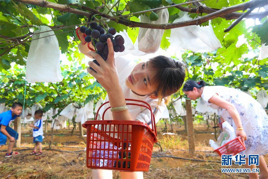 (社會)(1)江西樟樹:農業旅遊熱起來