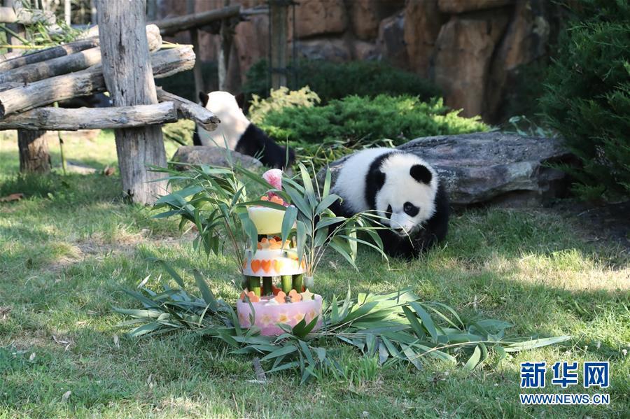 (國際)(2)法國首只大熊貓寶寶周歲慶生