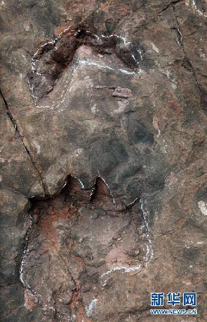 (圖文互動)(1)科研人員發現中國最大侏羅紀早期蜥腳類恐龍足跡群