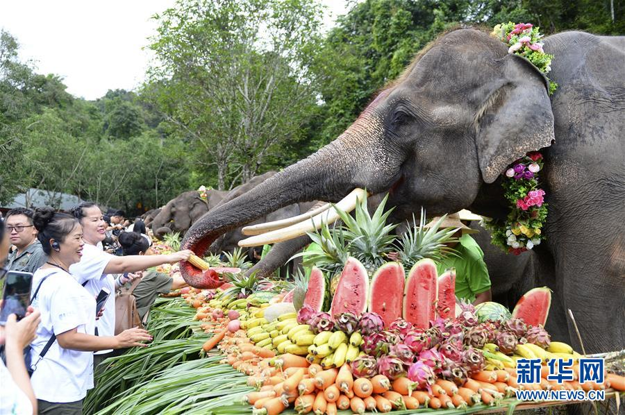 (社會)(1)雲南西雙版納舉辦世界大象日活動