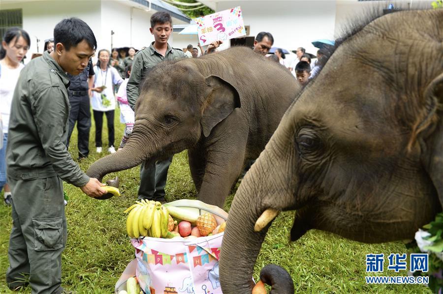 (社會)(3)雲南西雙版納舉辦世界大象日活動