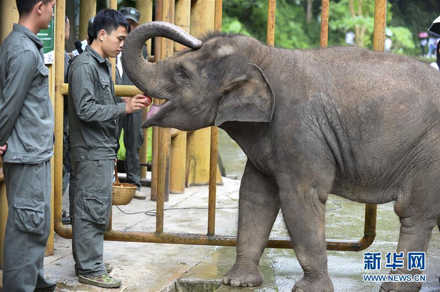(社會)(4)雲南西雙版納舉辦世界大象日活動