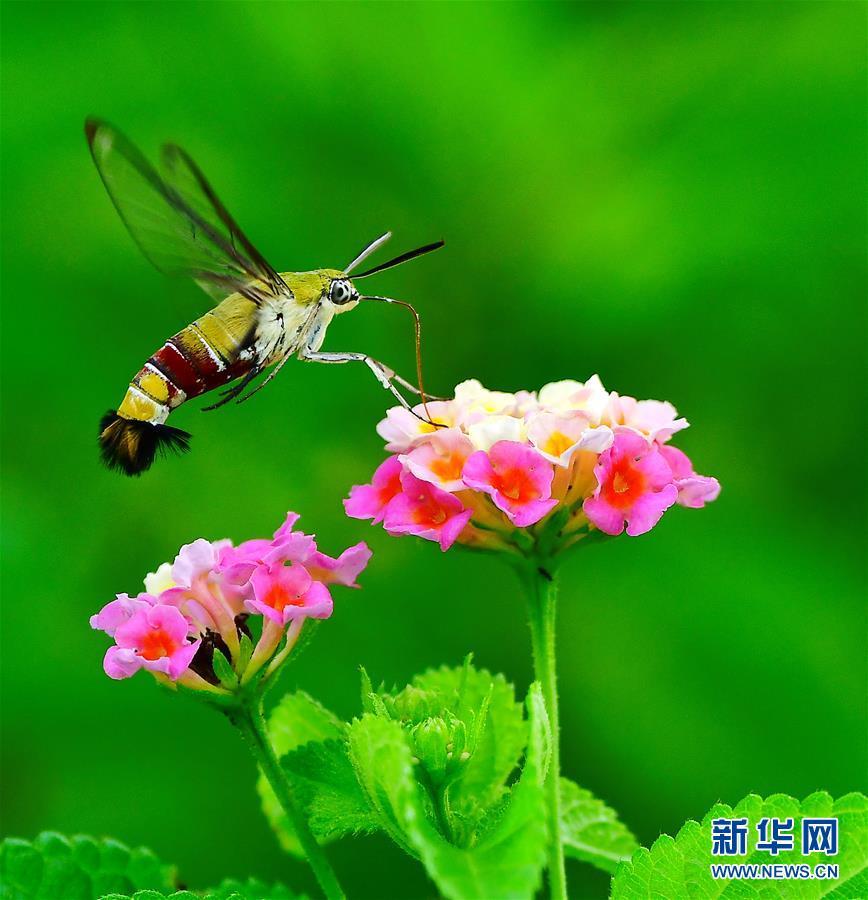 (新華網)(5)昆蟲戲花