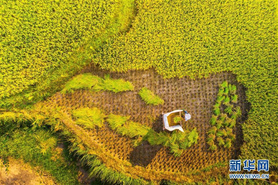 #(環境)(6)秋到山鄉 豐收在望