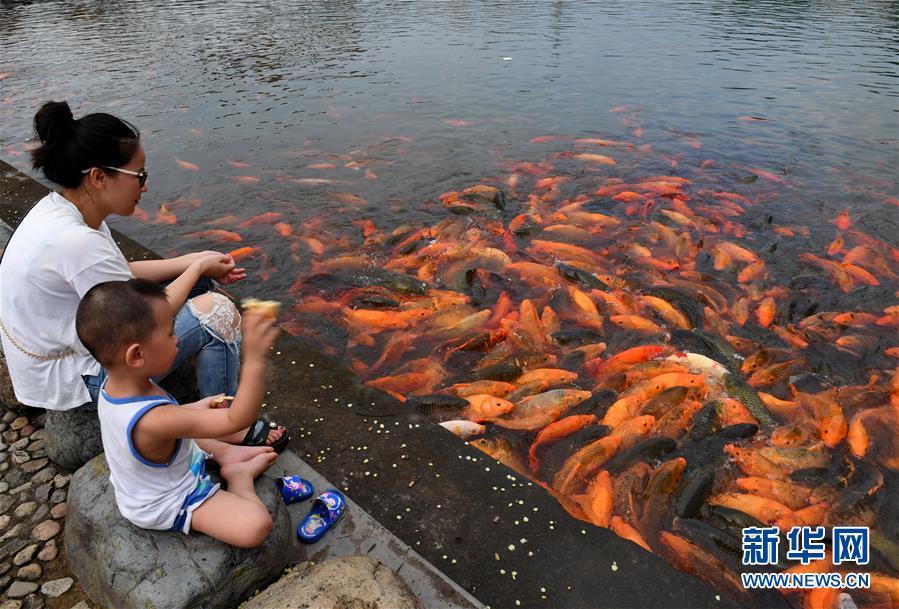 (環境)(1)福建福鼎:桐山溪畔人魚同樂