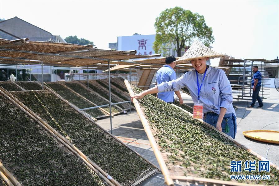 (社會)(4)福建福鼎:制茶能手比拼技藝