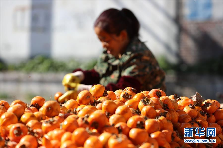 #(经济)(1)柿子深加工促增收