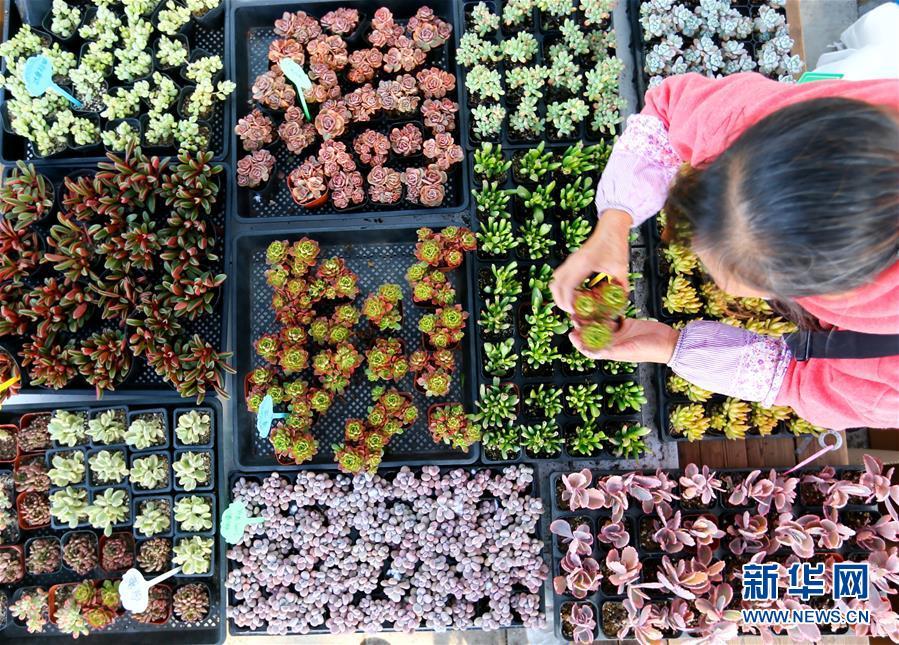 """#(經濟)(1)山東即墨:""""農旅多肉""""助力生態農業發展"""