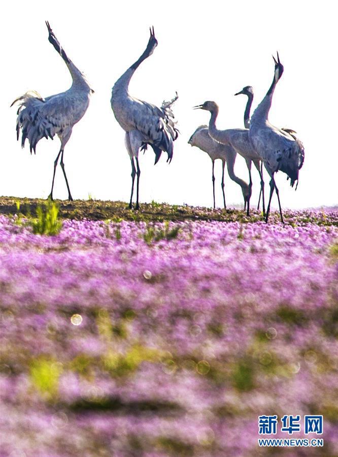 (鏡觀中國·新華社國內照片一周精選)(19)花開候鳥來
