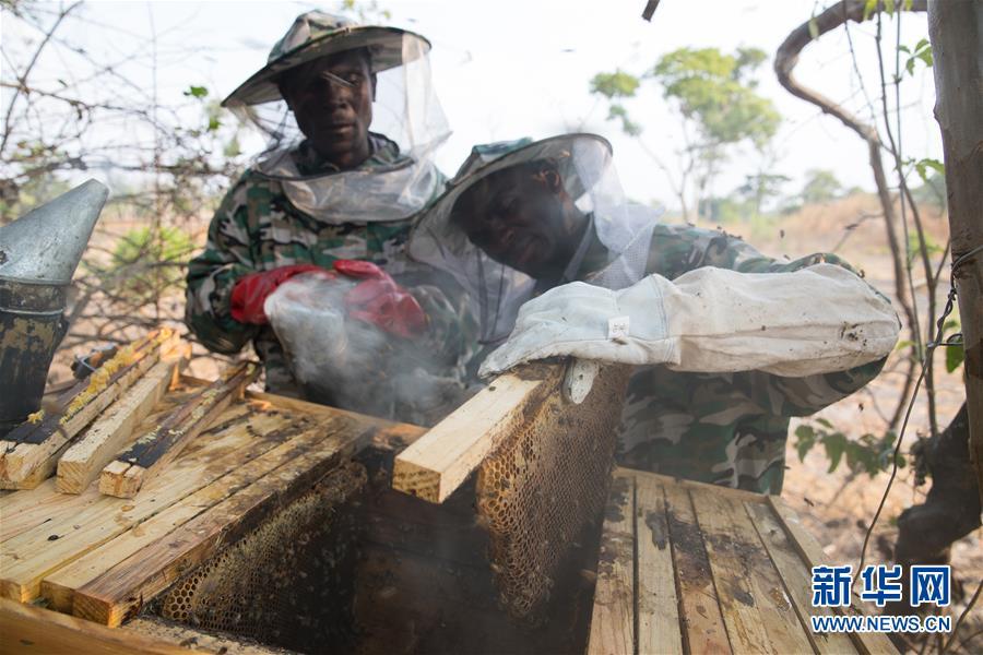 (國際·聚焦進口博覽會·圖文互動)(1)通訊:讚比亞蜂蜜企業欲借進博會開拓中國市場