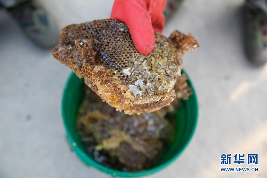 (國際·聚焦進口博覽會·圖文互動)(7)通訊:讚比亞蜂蜜企業欲借進博會開拓中國市場