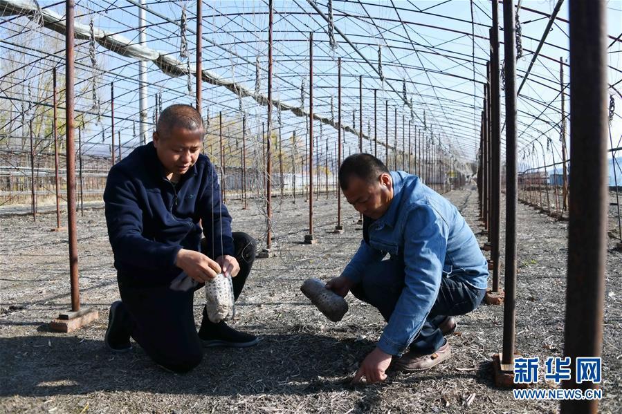 (百城百縣百企調研行·圖文互動)(9)瞧瞧這些村咋富起來的——黑龍江省牡丹江市發展特色精品農業促農增收