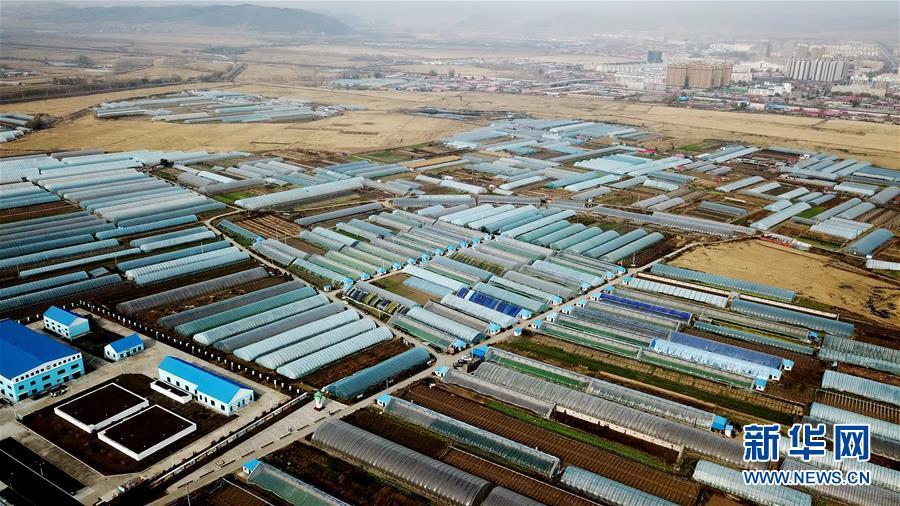 (百城百縣百企調研行·圖文互動)(1)瞧瞧這些村咋富起來的——黑龍江省牡丹江市發展特色精品農業促農增收