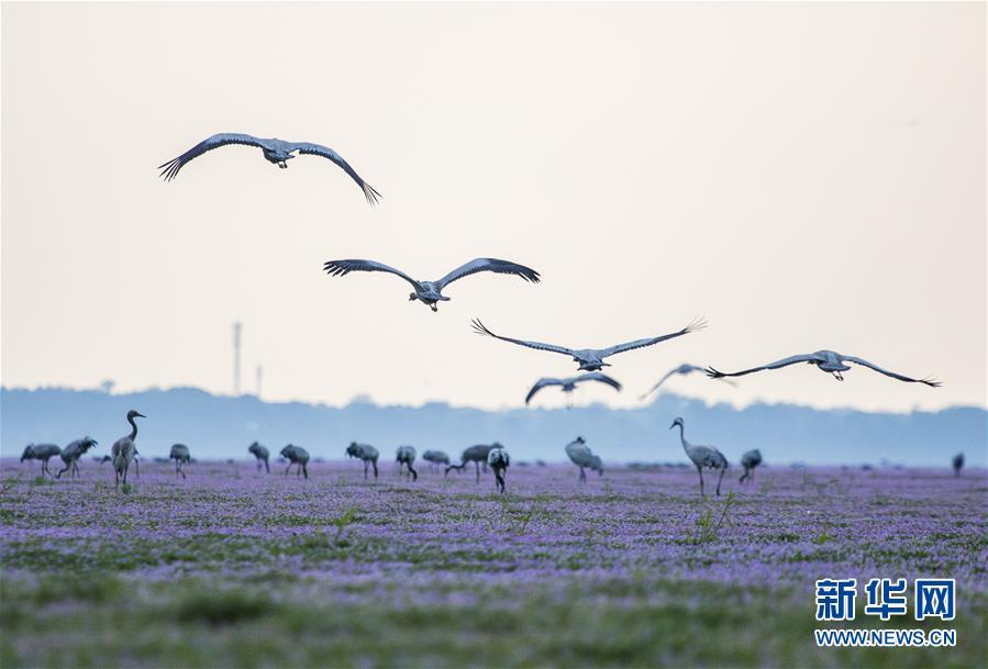 #(視·覺)(1)候鳥來的季節