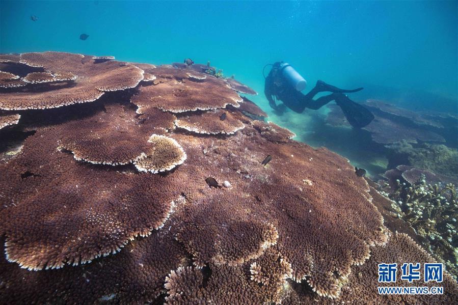 (環境)(1)潛水教練擔任義務珊瑚保育員