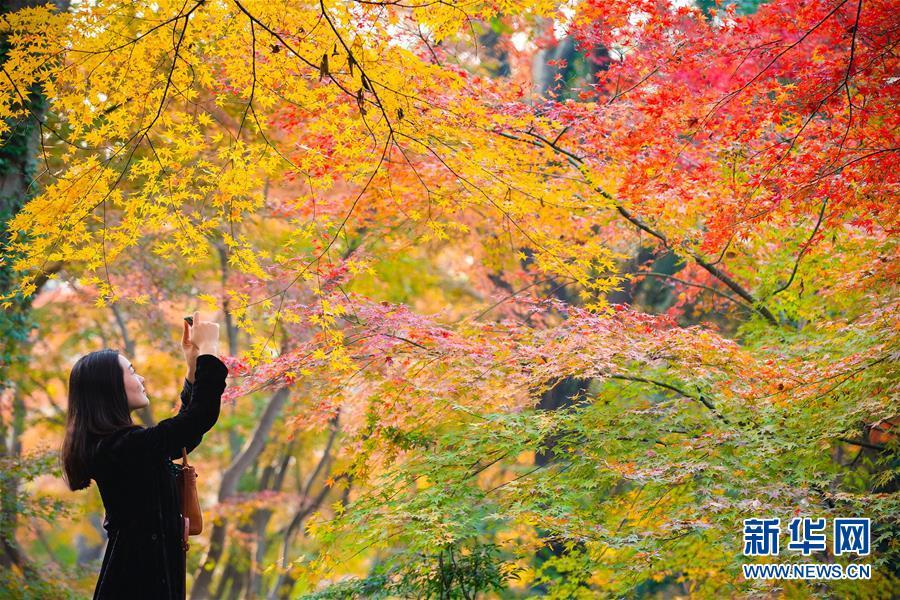 #(環境)(1)初冬美景如畫