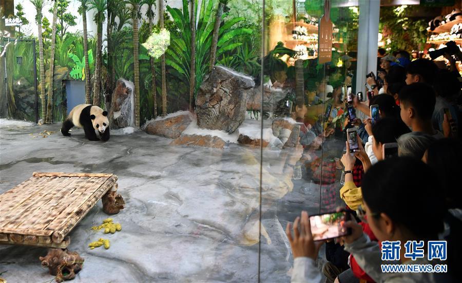(社會)(1)大熊貓亮相海口