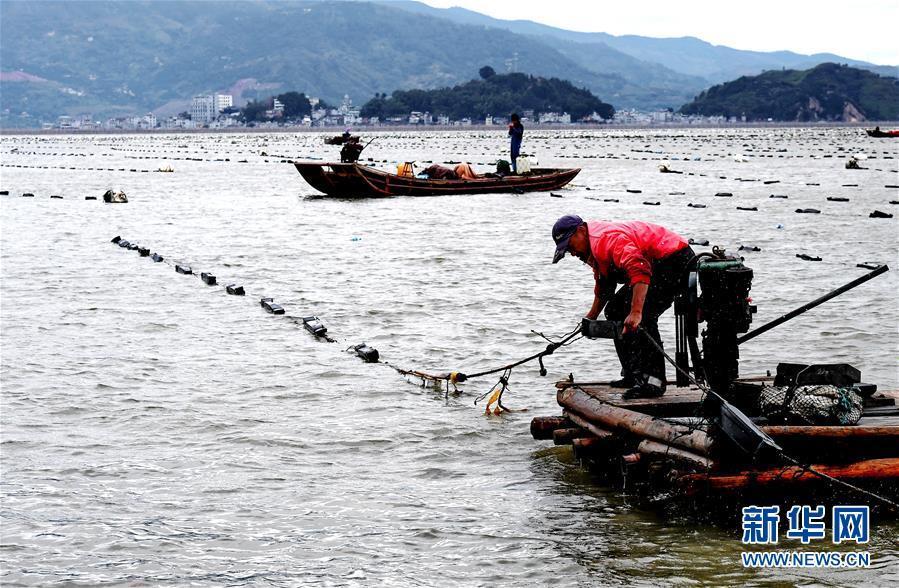 (經濟)(1)福建霞浦:漁民海上忙冬播