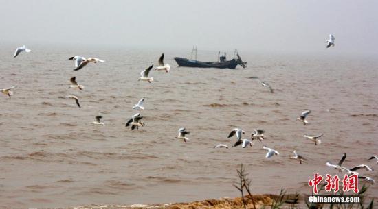 資料圖:渤海灣畔。王佔軍 攝