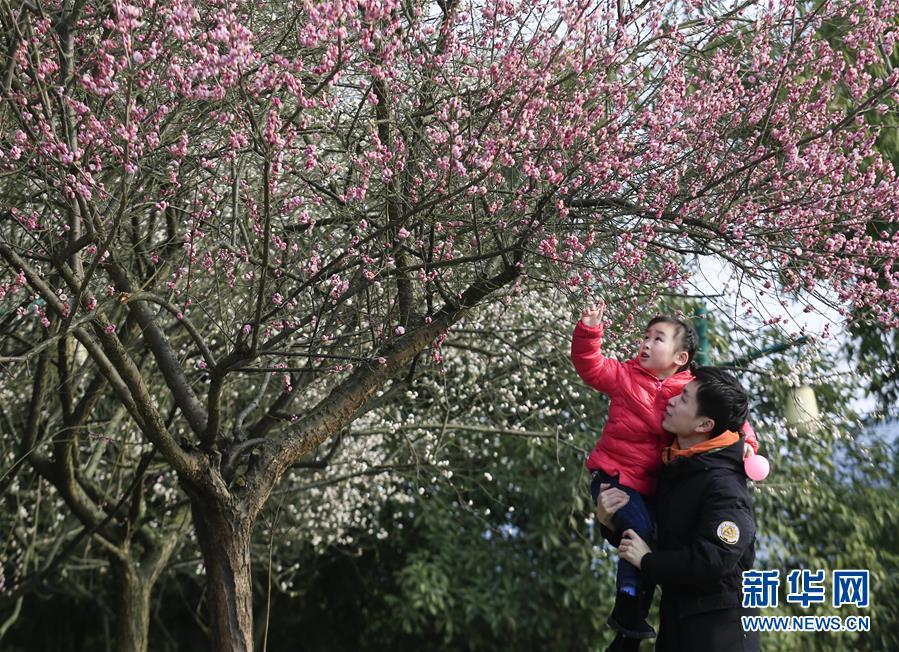 #(環境)(1)花香迎春來