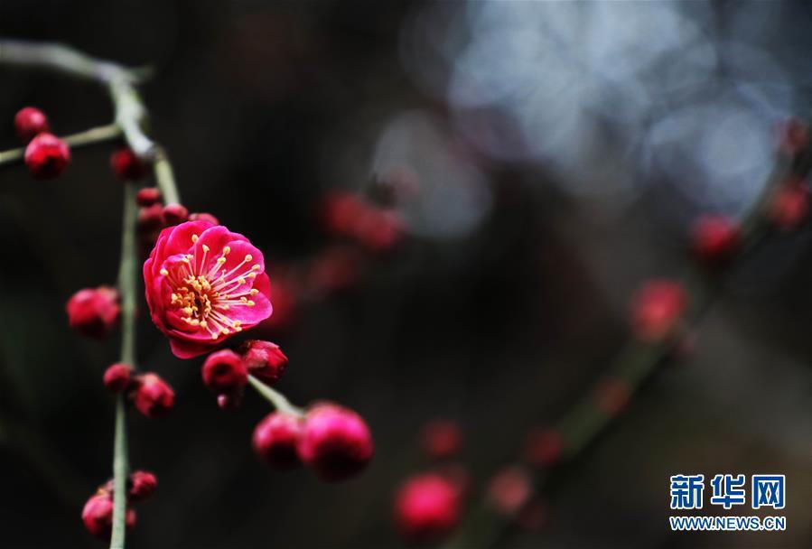 #(環境)(3)花香迎春來