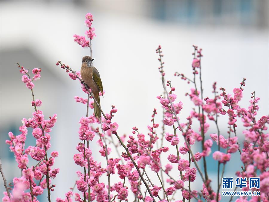 #(環境)(4)花香迎春來