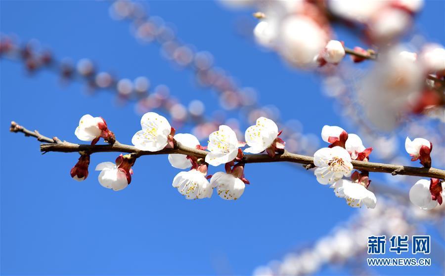 #(環境)(8)春季花爭艷