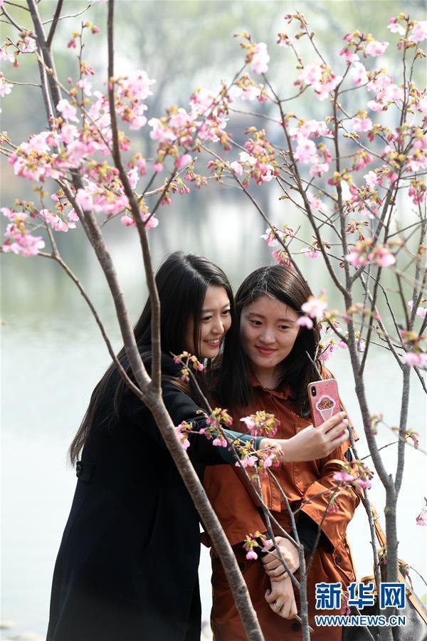 (環境)(2)玉淵潭早櫻迎春
