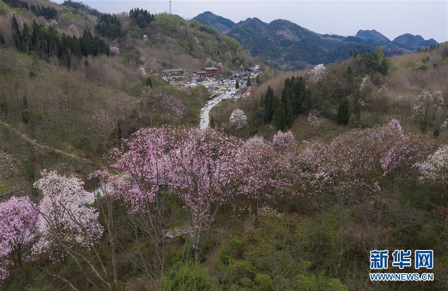 (春季美麗生態)(4)春花爛漫時