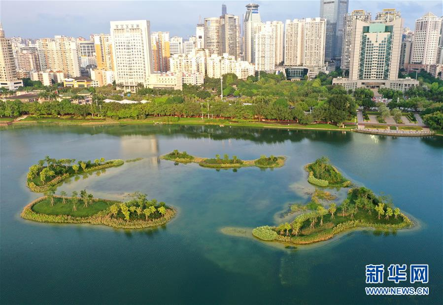 (環境)(4)南寧:南湖岸邊花飄香