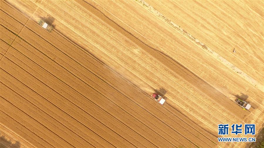#(經濟)(8)山東小麥收獲已過六成