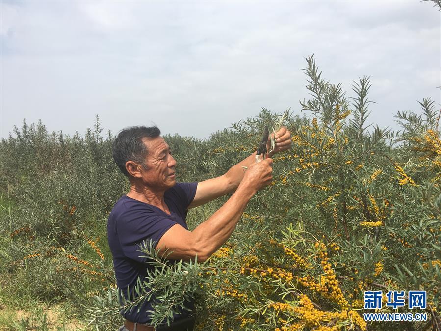 (權威訪談·聚焦中國經濟亮點·圖文互動)(4)防治土地荒漠化 推動綠色發展——專訪國家林業和草原局副局長劉東生