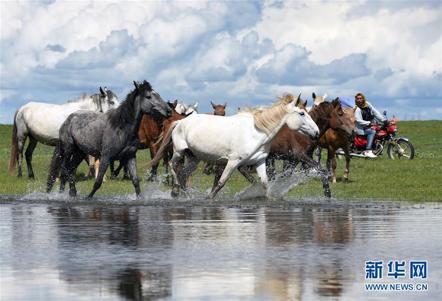 (美麗中國)(4)馬蹄踏水 舞動草原
