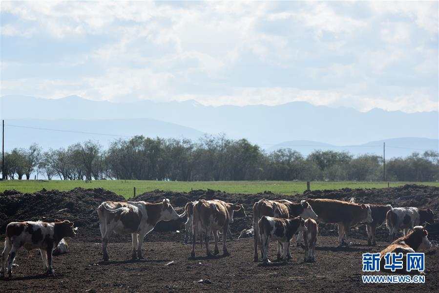 (環境)(2)生態牧場助力牧戶增收