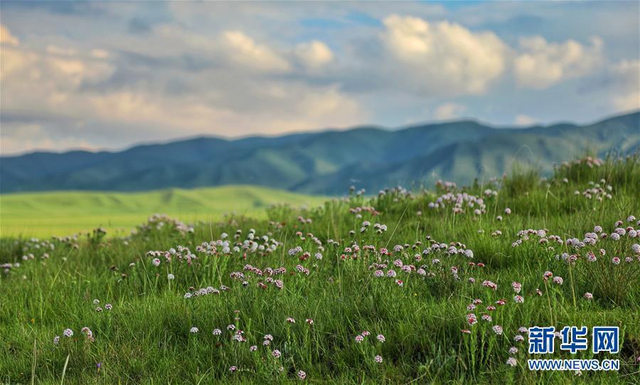 (圖文互動)(4)原子城:鮮花開滿草原