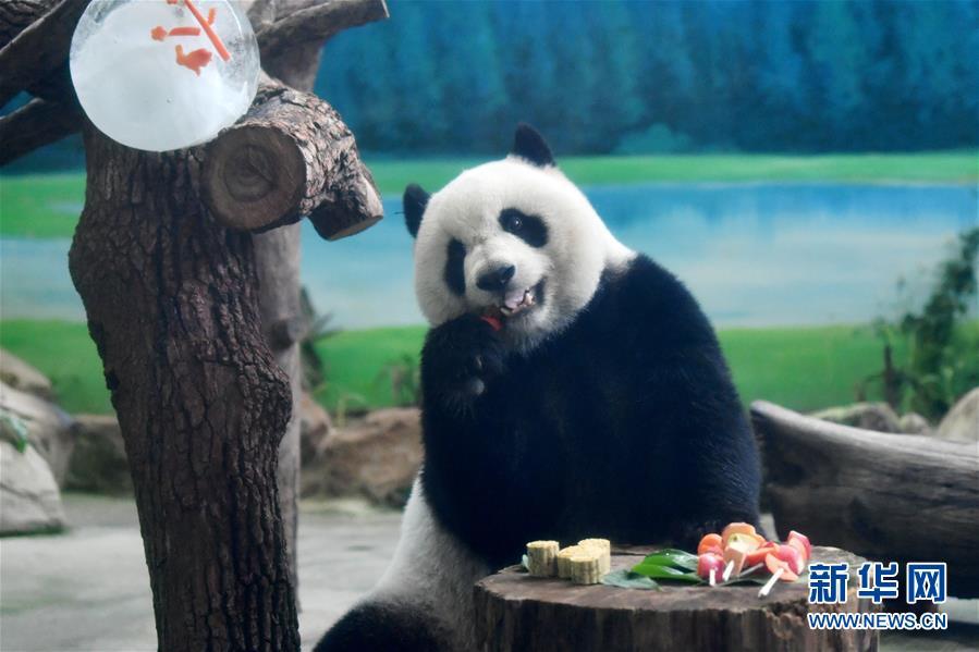 """(社會)(1)大熊貓吃""""月餅""""過中秋"""
