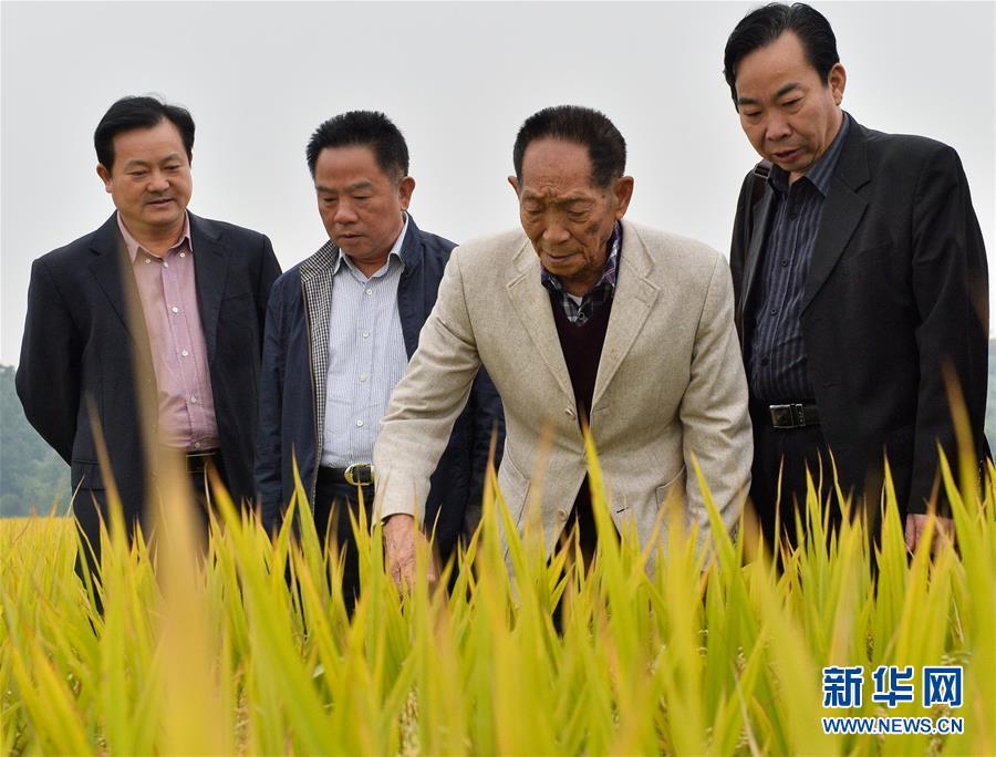 (壯麗70年·奮鬥新時代——共和國榮光·圖文互動)(2)袁隆平:把對祖國的熱忱結成飽滿的稻穗