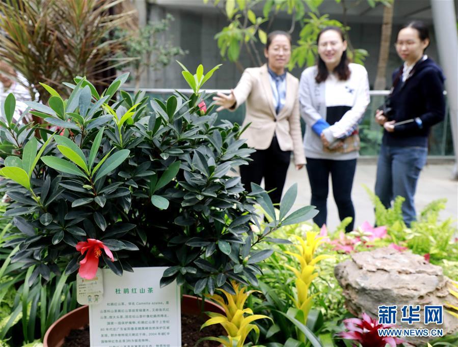 (圖文互動)(1)北京世園會200余個特有珍稀植物品種搬入北京植物園
