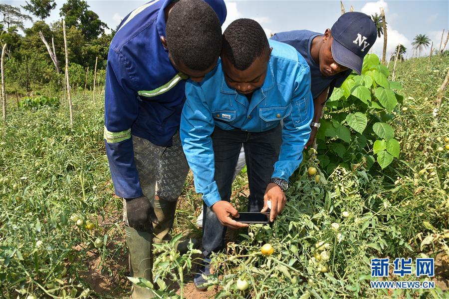 (國際·圖文互動)(1)通訊:非洲特色手機應用方便當地農民