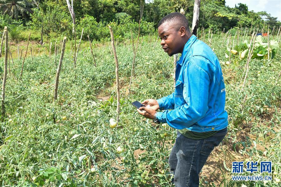 (國際·圖文互動)(3)通訊:非洲特色手機應用方便當地農民