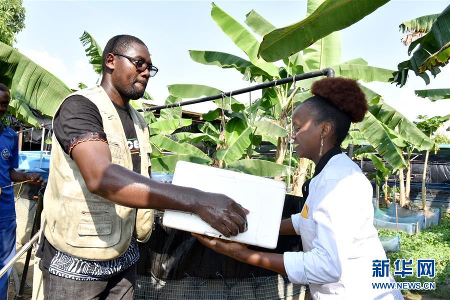 (國際·圖文互動)(4)通訊:非洲特色手機應用方便當地農民