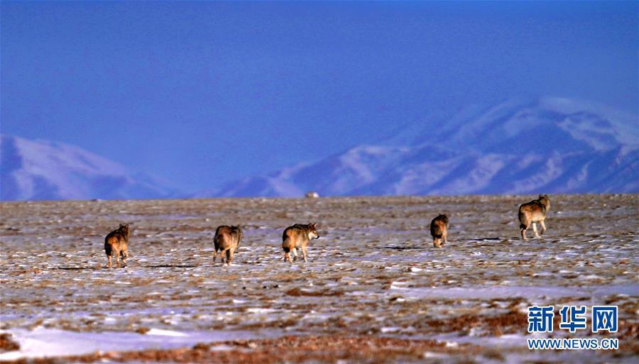 (圖文互動)(1)第二次青藏高原科考成果表明三江源生態持續向好