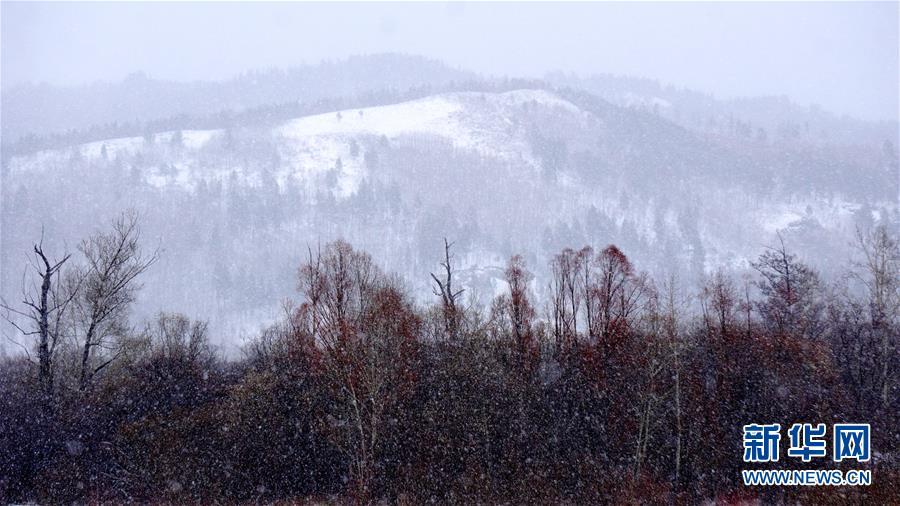 (圖文互動)(2)黑龍江漠河:谷雨節氣迎來大雪