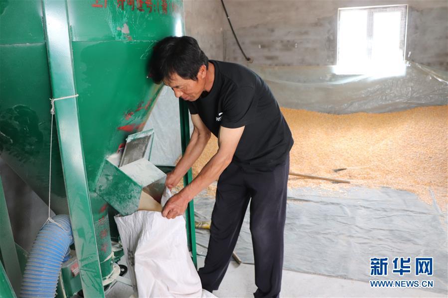 (鄉村振興·圖文互動)(4)內蒙古伊金霍洛旗:自家生豬基地養 環境好來收入旺